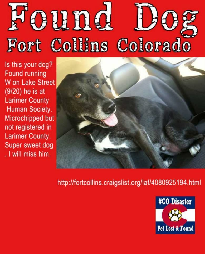 Sweet Black Dog Found In Fort Collins Co He S Currently At