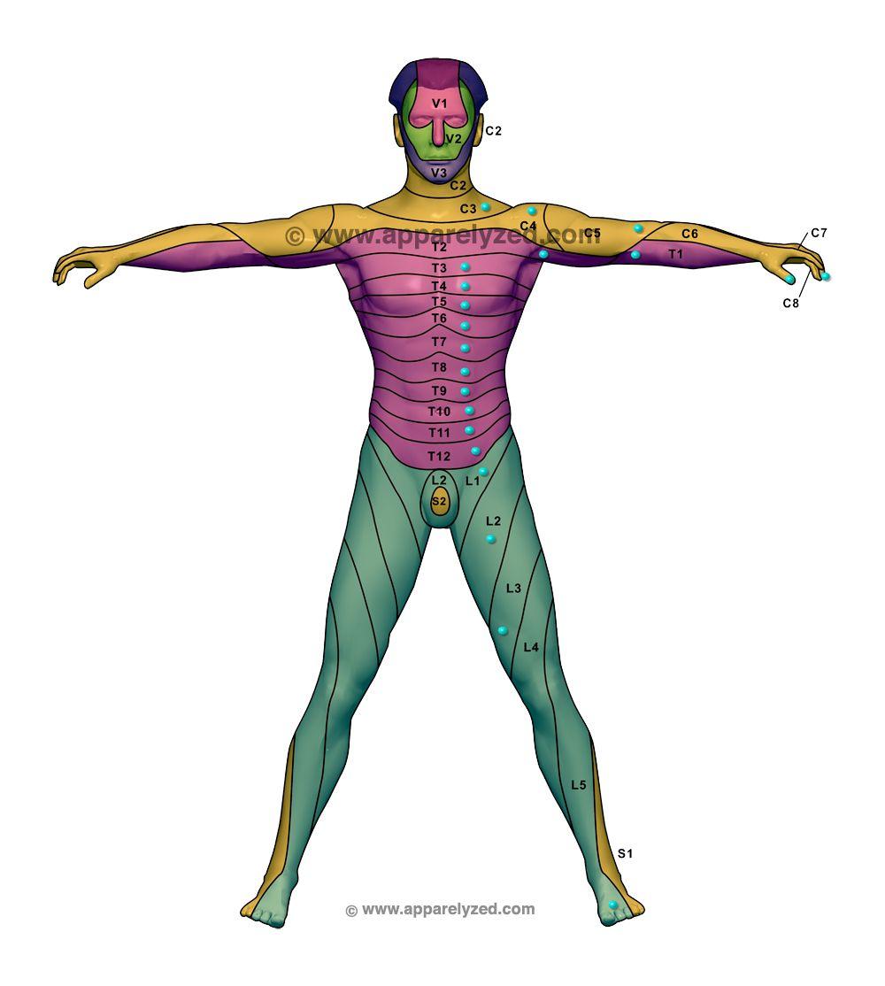 Anterior dermatome chart health pinterest chart medical and anterior dermatome chart pooptronica