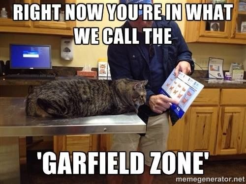 The Garfield Zone Funny Animal Pictures Funny Cats Funny Animals