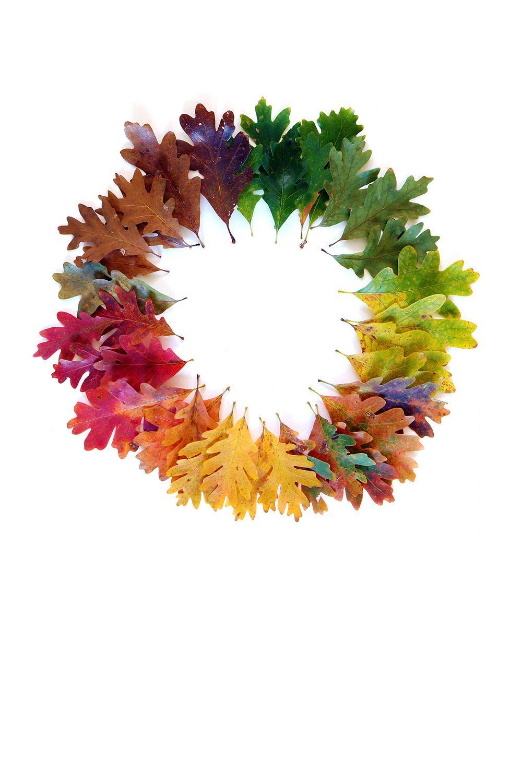 leaves like gems mary jo hoffman nature art pinterest oak