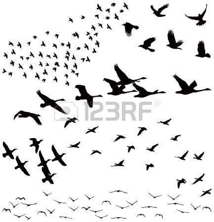 fliegende v gel silhouette ein vogelschwarm tiere pinterest vogel silhouette fliegende. Black Bedroom Furniture Sets. Home Design Ideas