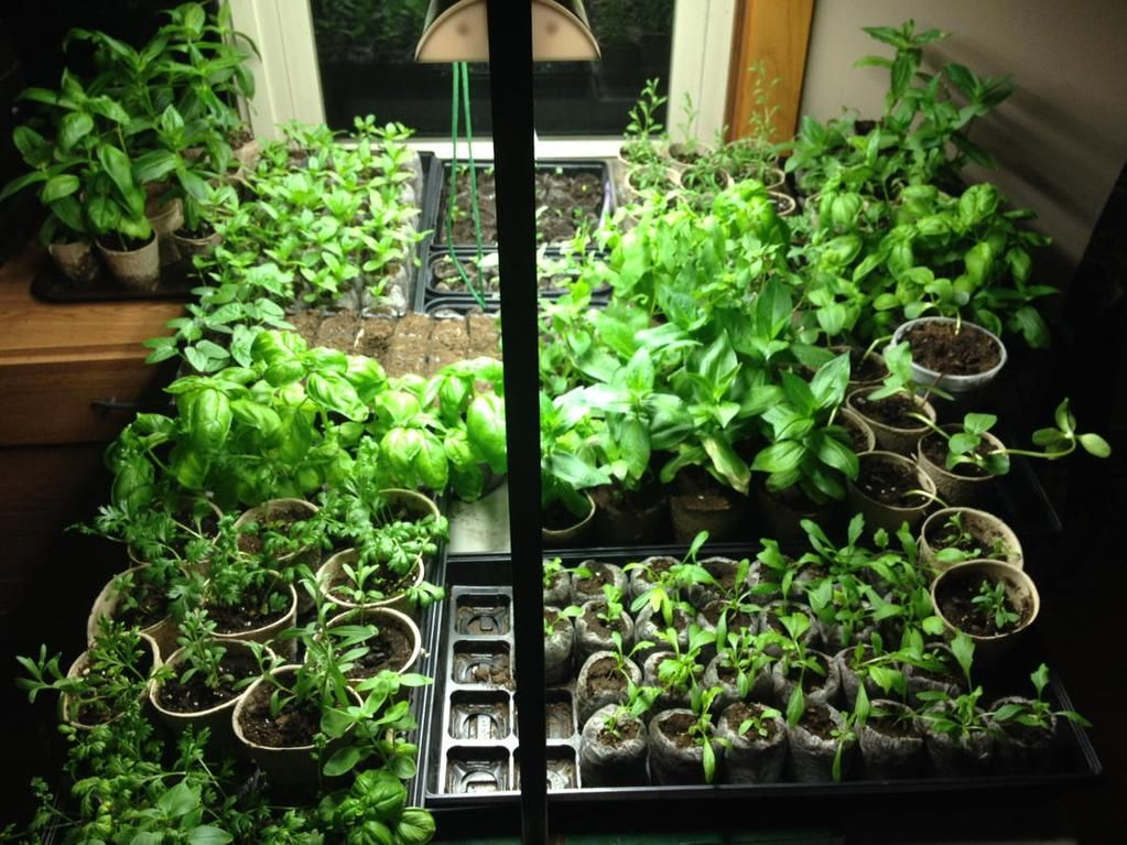 "Michele on Twitter: ""My babies #seedlings want warmth @davidmurphy6abc #cantwaittoplant #gardening http://t.co/K9Y5axOlWv"""