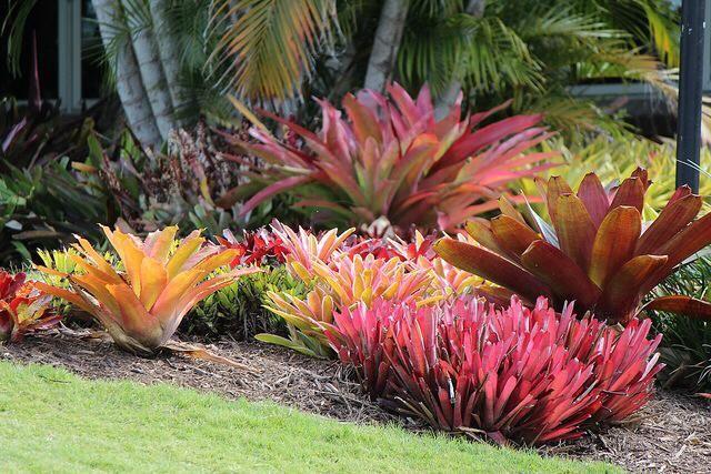 Full sun. | Bromeliads in landscape | Pinterest | Gardens ...