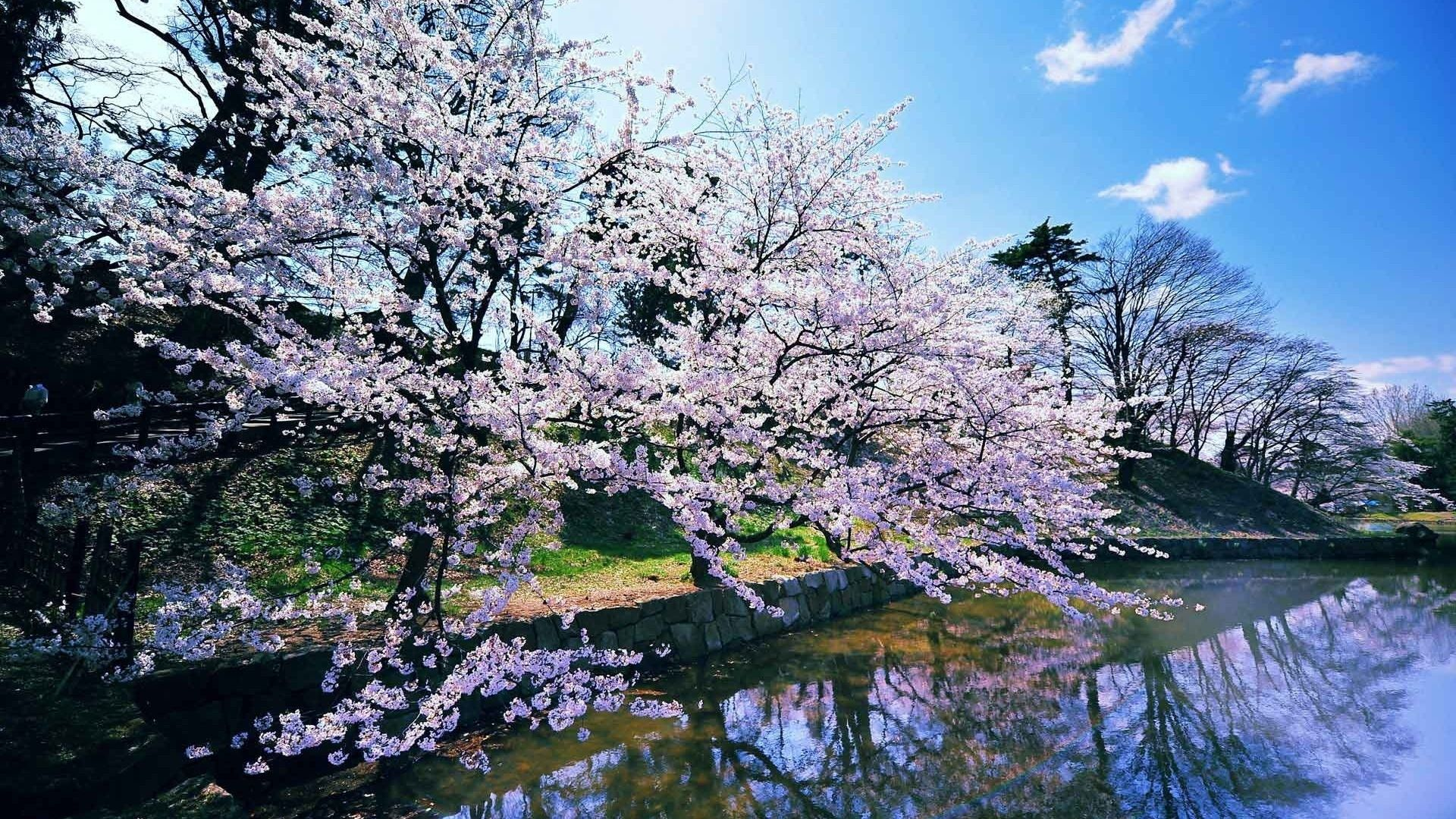 10 Top Free Early Spring Desktop Wallpaper Full Hd 1080p For Pc Background Spring Wallpaper Cherry Blossom Wallpaper Landscape Wallpaper
