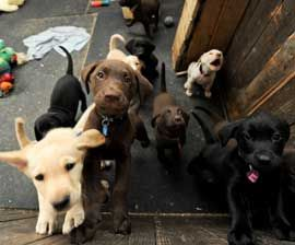 More Than 2 000 Pet Stores Take A Stand Against Puppy Mills Puppymills Dog Hsus Humanesociety Lab Puppies Puppies Animals