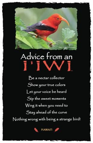 Each postcard says: Advice from an I'iwi Be a nectar collector Show your true colors Let your voice be heard Sip the sweet moments Wing it when you need to Stay