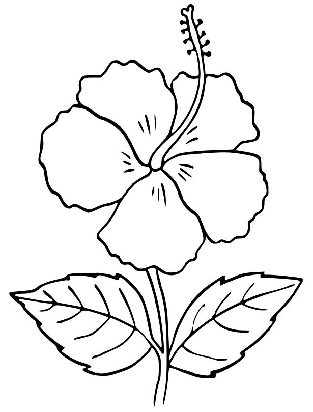 Hibiscus Outline Flower Outline Flower Printable Flower Drawing