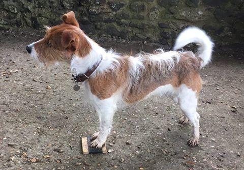 Barnaby Hund
