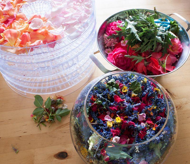 Getrocknete Blüten getrocknete blüten tischdeko selbst gesammelt und im dörrgerät