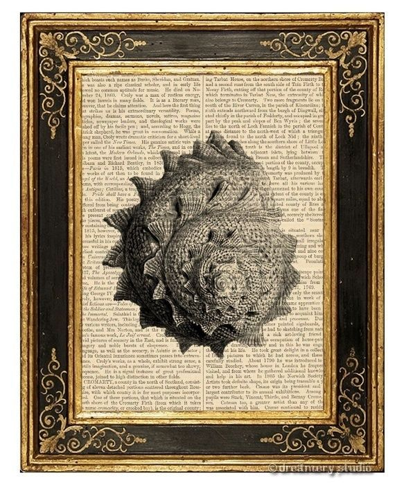 Sea Snail Shell #4 Art Print on Antique Book Page Vintage Illustration Seashell