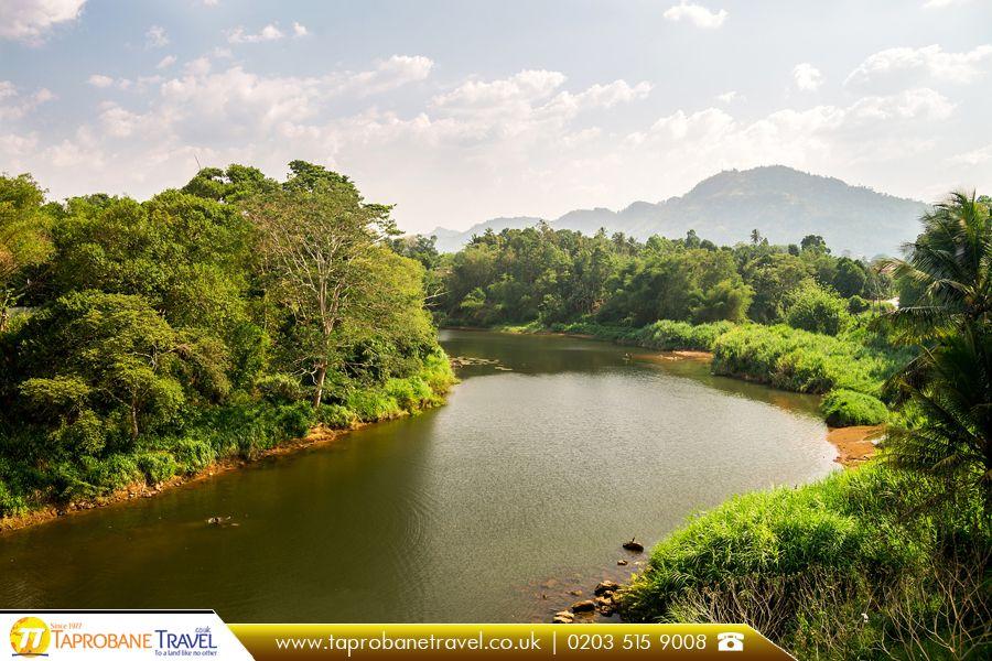 River in Gampola, Sri Lanka   |   The Best Travel Agents to Sri Lanka: https://goo.gl/tH4ved   |    #travel #gampola #srilanka #river #beautiful #travelling #travelstoke #airfares #booknow #bookonline #flightdeals #travesrilanka #flights #taprobanetravel #travelagents #travelagentsinuk #cheapflights #cheapflightstosrilanka