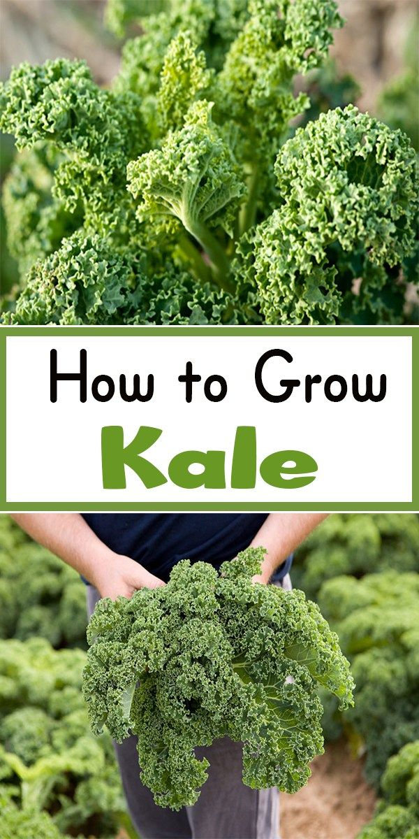 Problems with kale