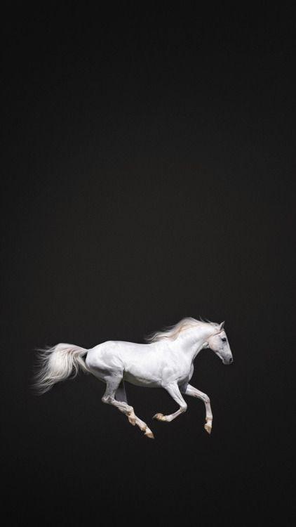Riyad4 Horse Wallpaper Horse Background Beautiful Horses