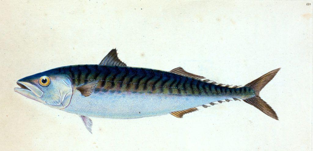 12 Free Fish Clipart Fish Clipart Clip Art Fish