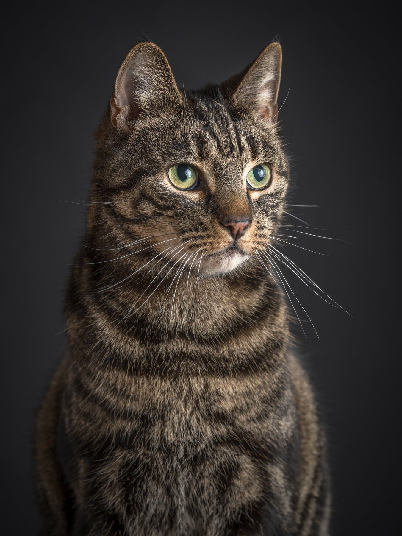 Pin by LXN Photography Lianna Xiaok on Animals Cats