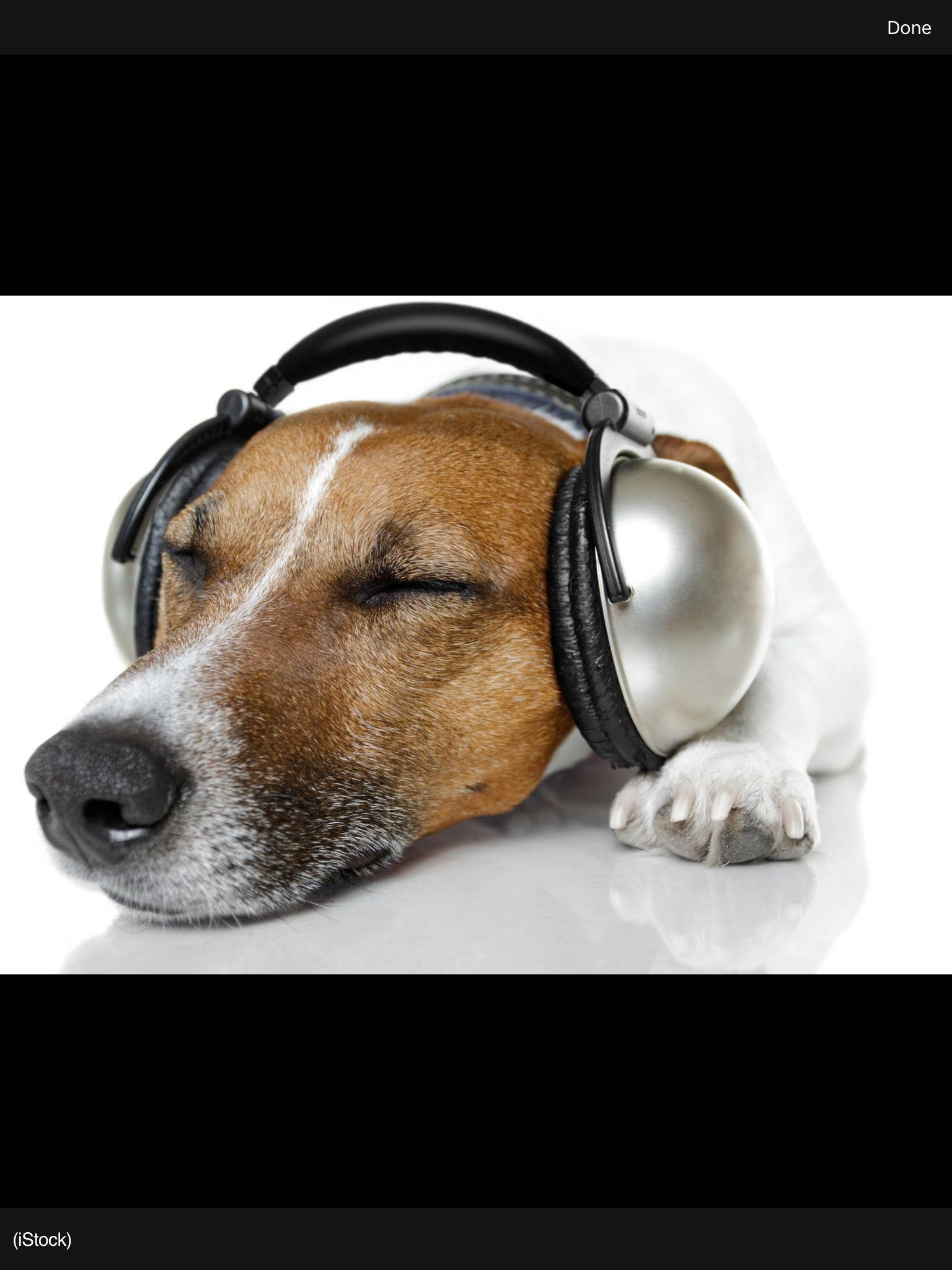 Pin by Betty McGary on Music Dogs, Music help, Your dog