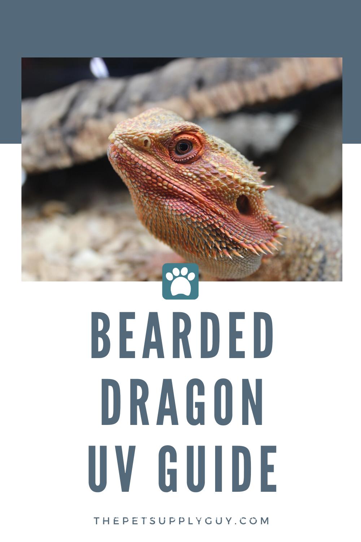 Best Uvb Light For Bearded Dragon The Pet Supply Guy In 2020 Bearded Dragon Bearded Dragon Lighting Bearded Dragon Care