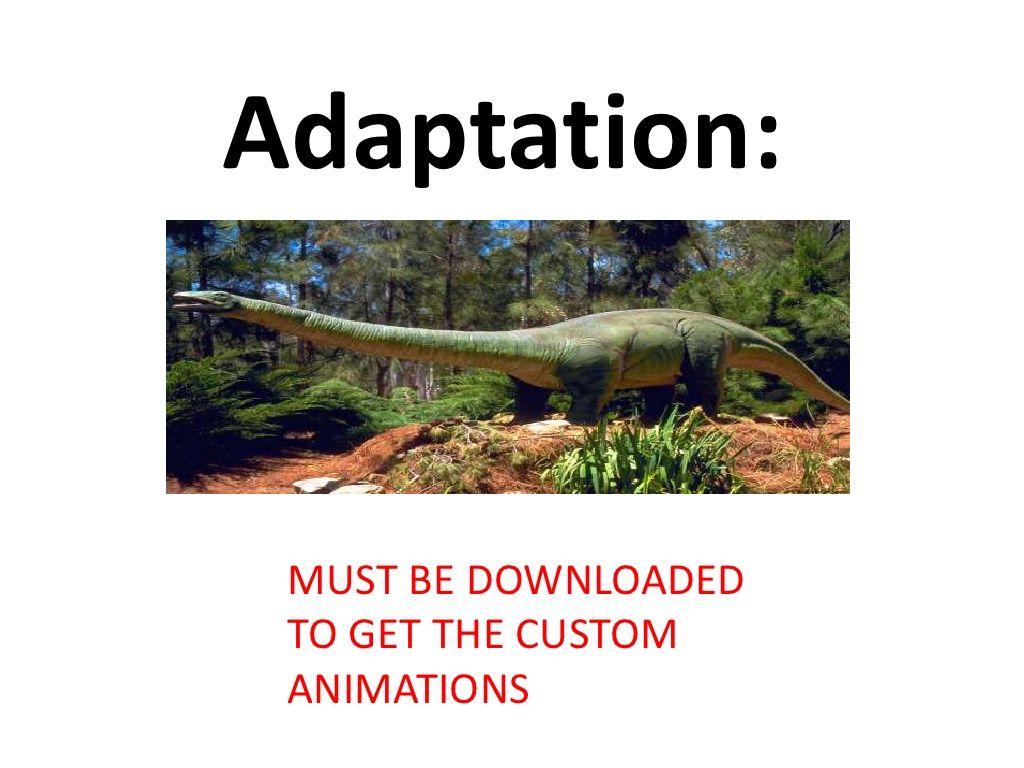 Intro Animal Adaptions Teach By Moira Whitehouse Via
