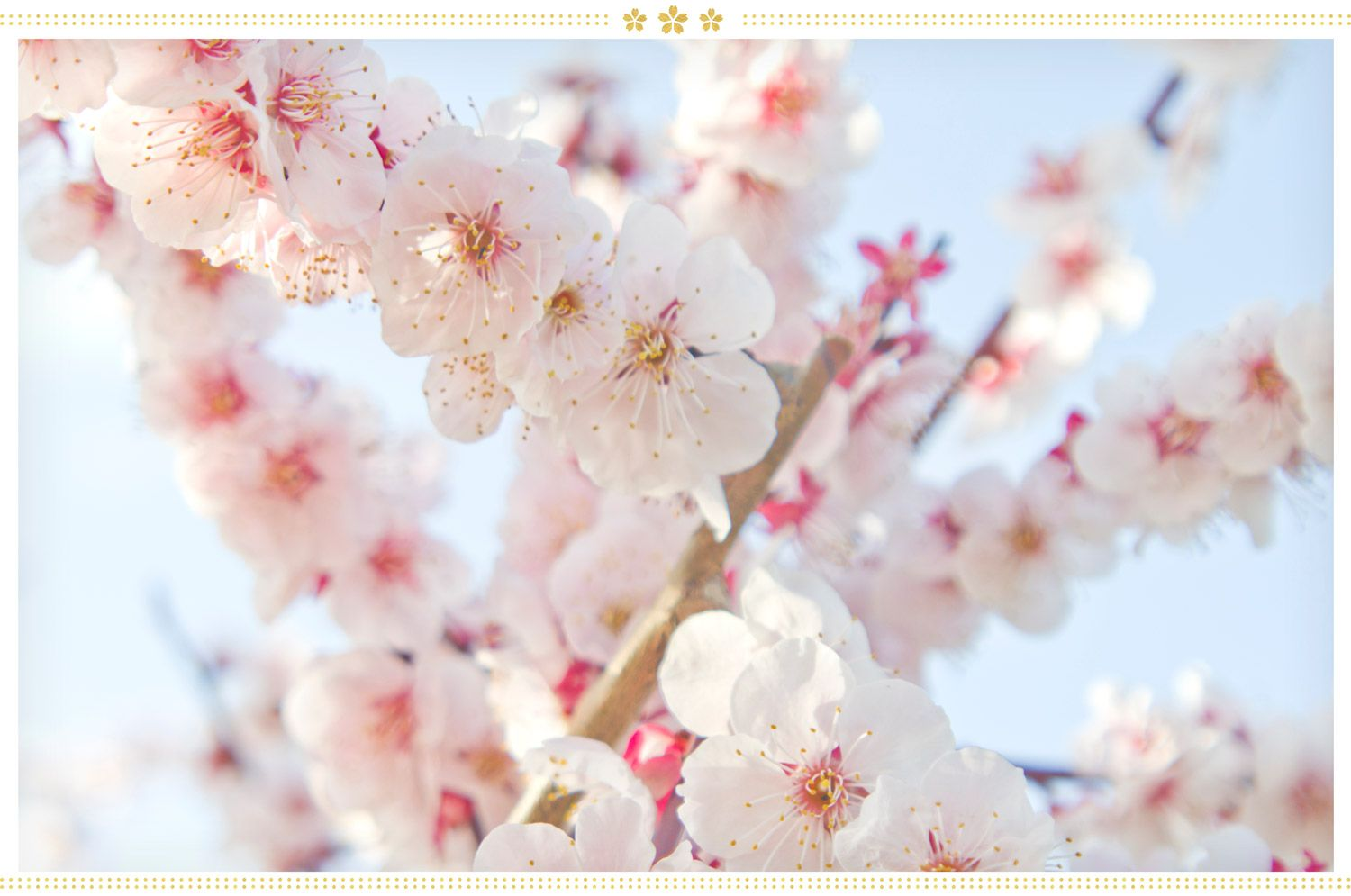 15 Japanese Flower Meanings and Where to Find Them