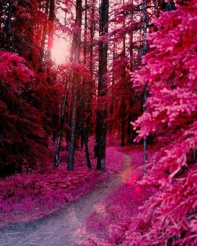 Beautiful Nature Girl Wallpaper: Pink Forest, Beautiful