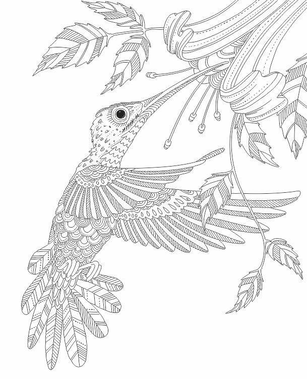 Hummingbird Zentangle Coloring Pages Colouring Adult Detailed