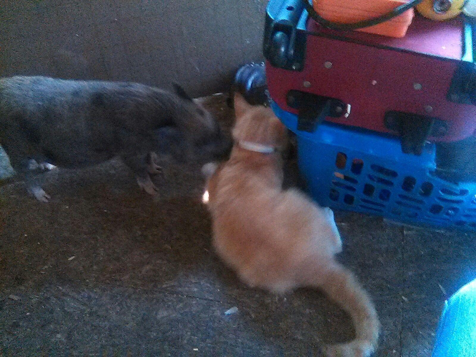 Porkchop and her bestie Garfield
