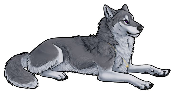 Grey Wolf Anime Wolves Pinterest Grey Wolves Wolves And