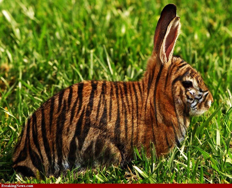 Тигр и кролик картинка
