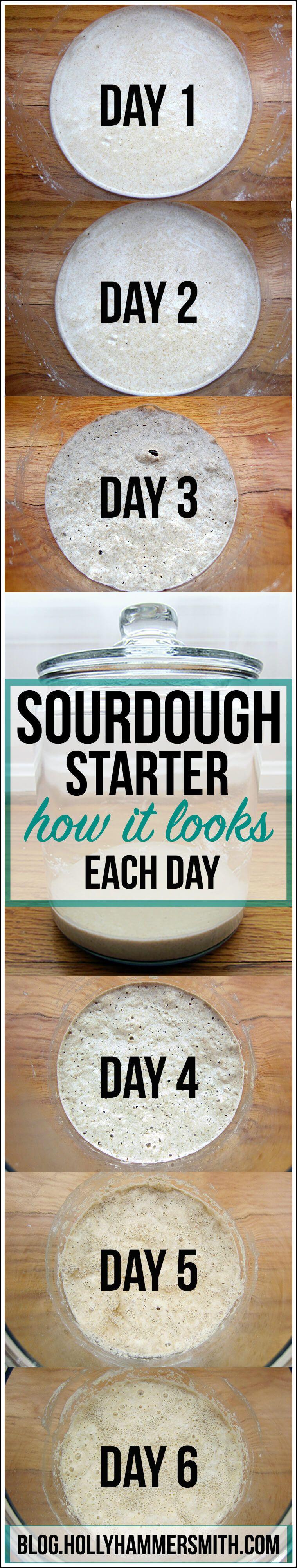 Sourdough Starter Day by Day How it Looks Bread starter