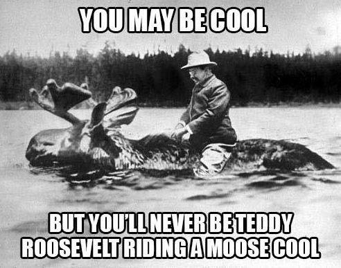 Moose cool