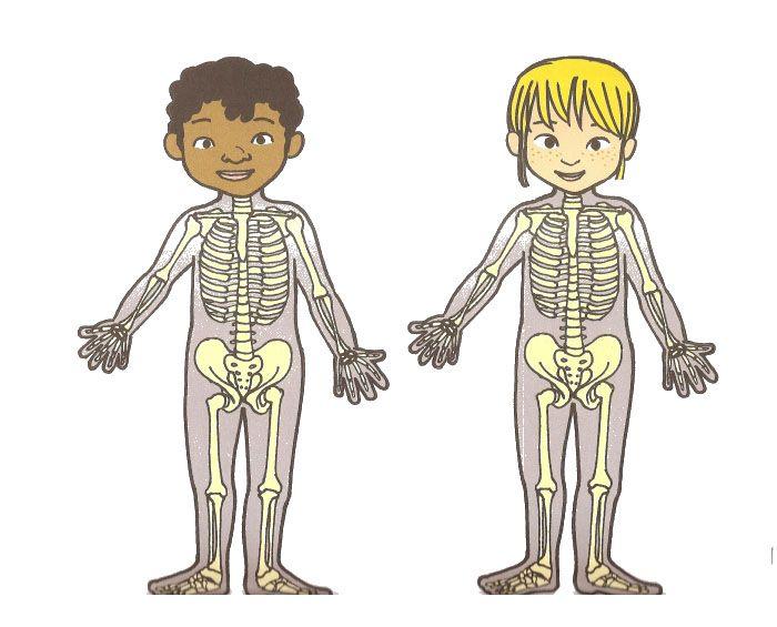 10ELCUERPOHUMANO.jpg 700×565 pixels | Science | Pinterest | Körper ...