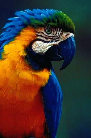 Trendy Talking Pet Bird Types Pet Birds Parrots Tropical Birds Parrot