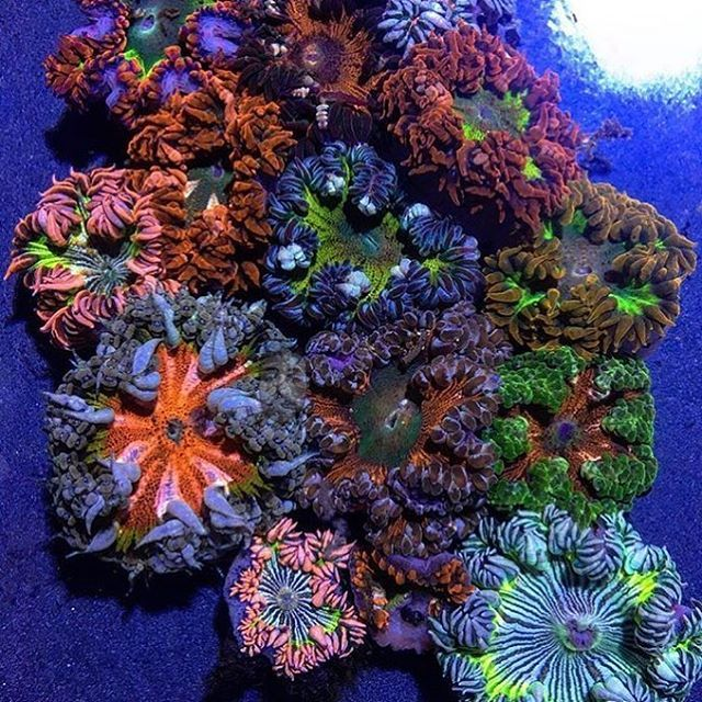 Reposting Polyplab Well This Is Awesome Reefpro New0cean Polyplab Just Go Www Polyplab Com Coral Ree Reef Tank Saltwater Aquarium Fish Tank
