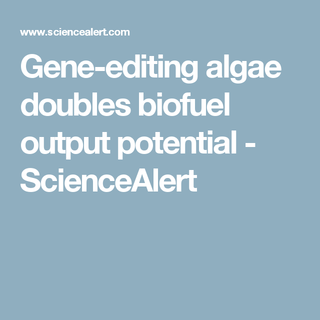 Gene-editing algae doubles biofuel output potential - ScienceAlert