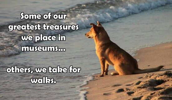 Some of  our  greatest treasures we place in museums. ... Others, we take for walks