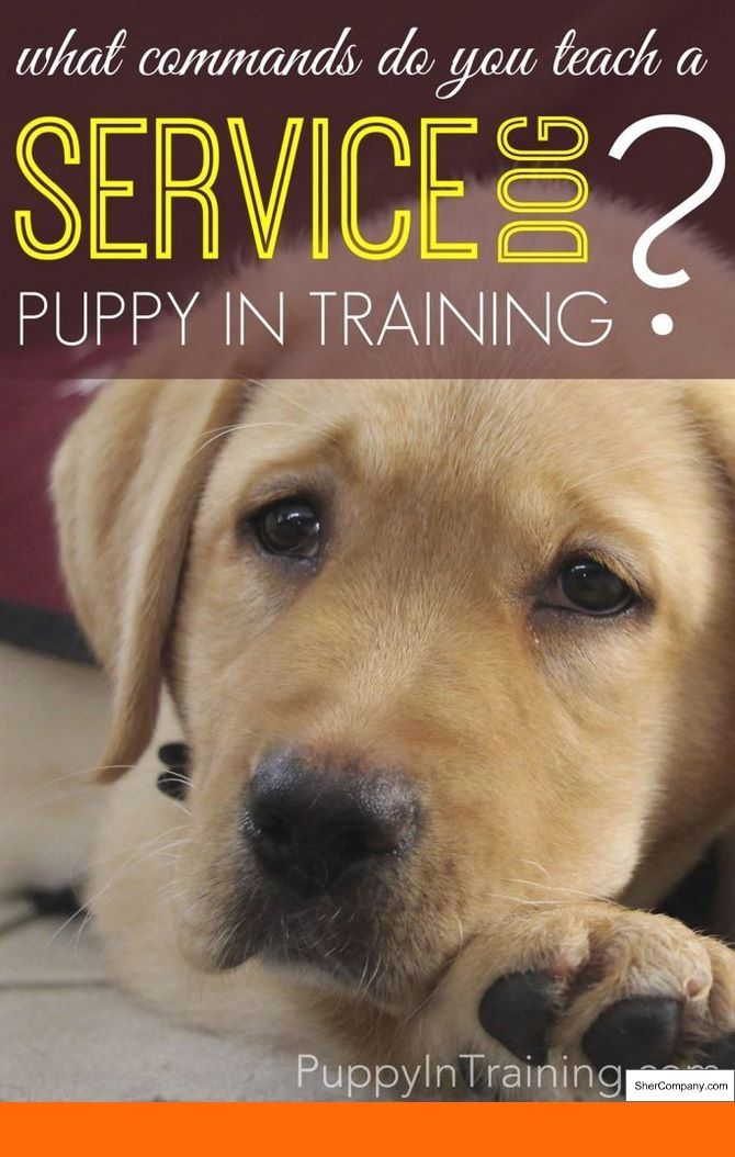 How To Train A Service Dog Youtube And How To Train Your Dog To Be