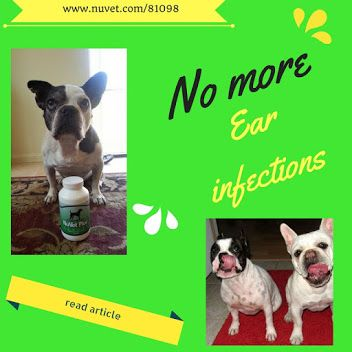 Finally A Remedy For Yeast Ear Infections In Your Dog Bulldog