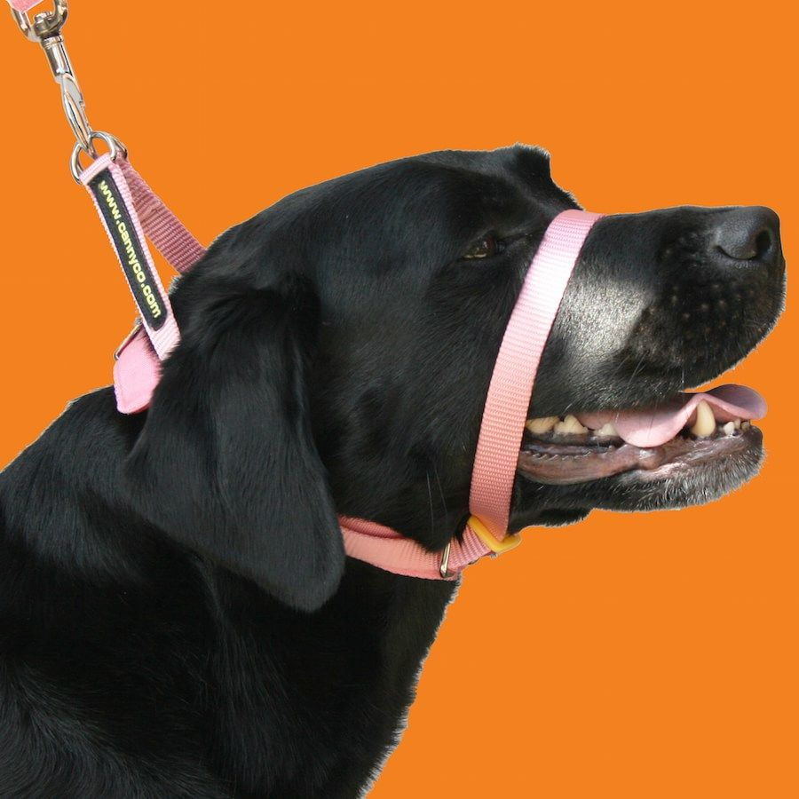 Buy Canny Collar size 1 to 7 Canny collar, Training