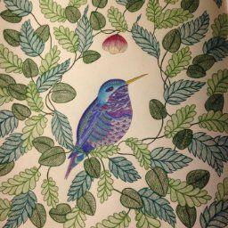 Animal Kingdom Color Me Draw Me Millie Marotta 9781454709107