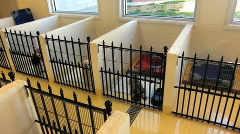 Photos Of Small Dog Apartments For Boarding Your Small Pets Pet Resorts Of America