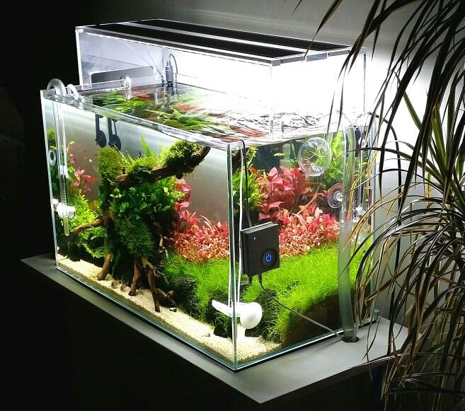 Aquascaping Ada 60p Subtle Red Aquascape Betta Aquarium Fish Tank Terrarium