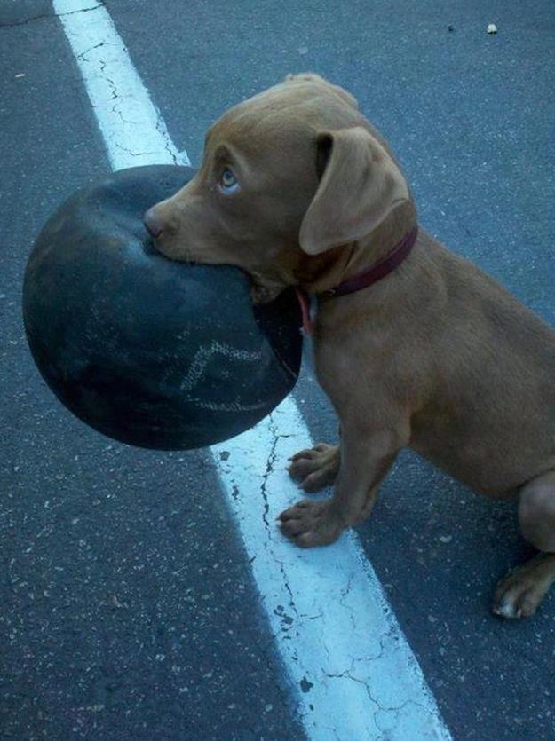 La pelota está lista para jugar. ¡Yo también! ¡Vamos!
