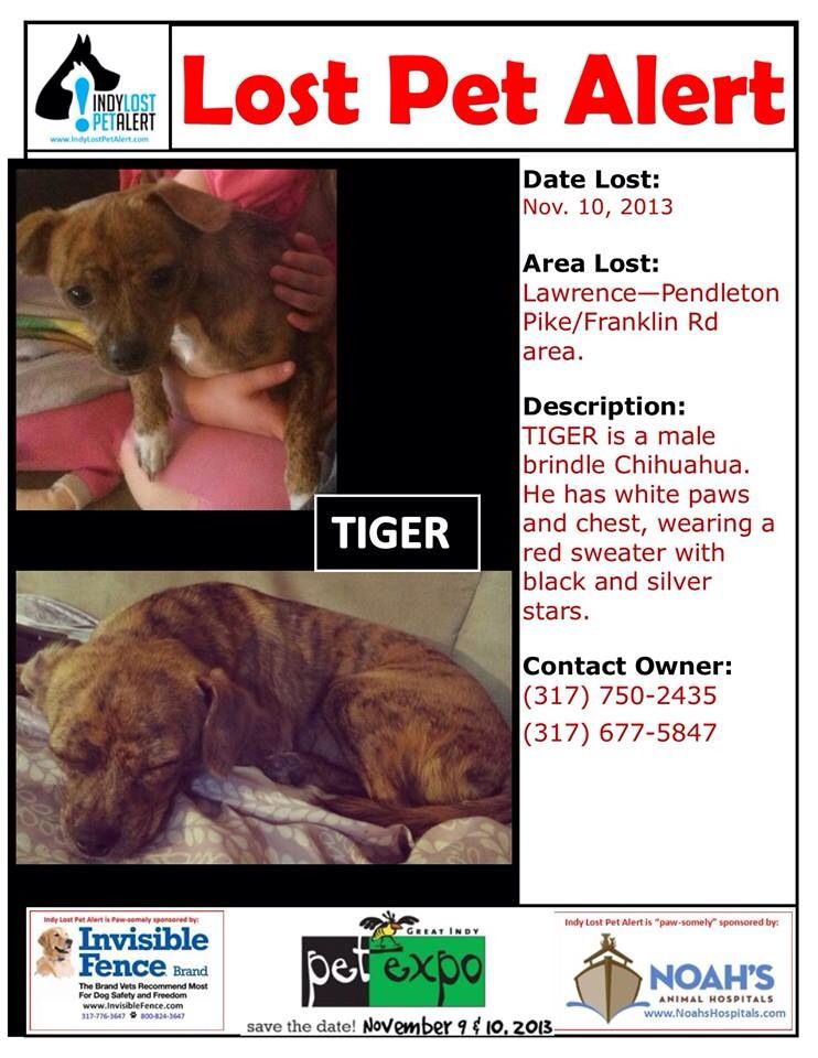 Lostdog 11 10 13 Indianapolis In Lawrence Pendleton Pike And Franklin Rd Chihuahua Male Brindle White Paws And Chest Red Losing A Dog Losing A Pet Brindle