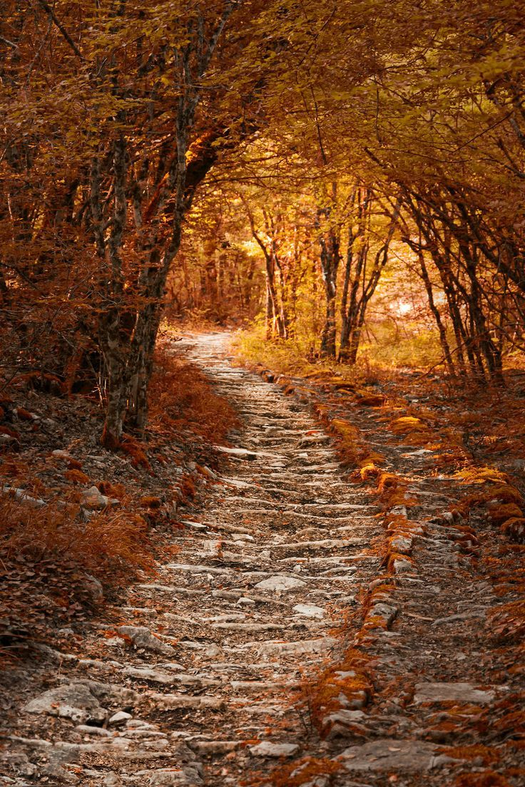Wooded Path Autumn Scenery Autumn Scenes Scenery