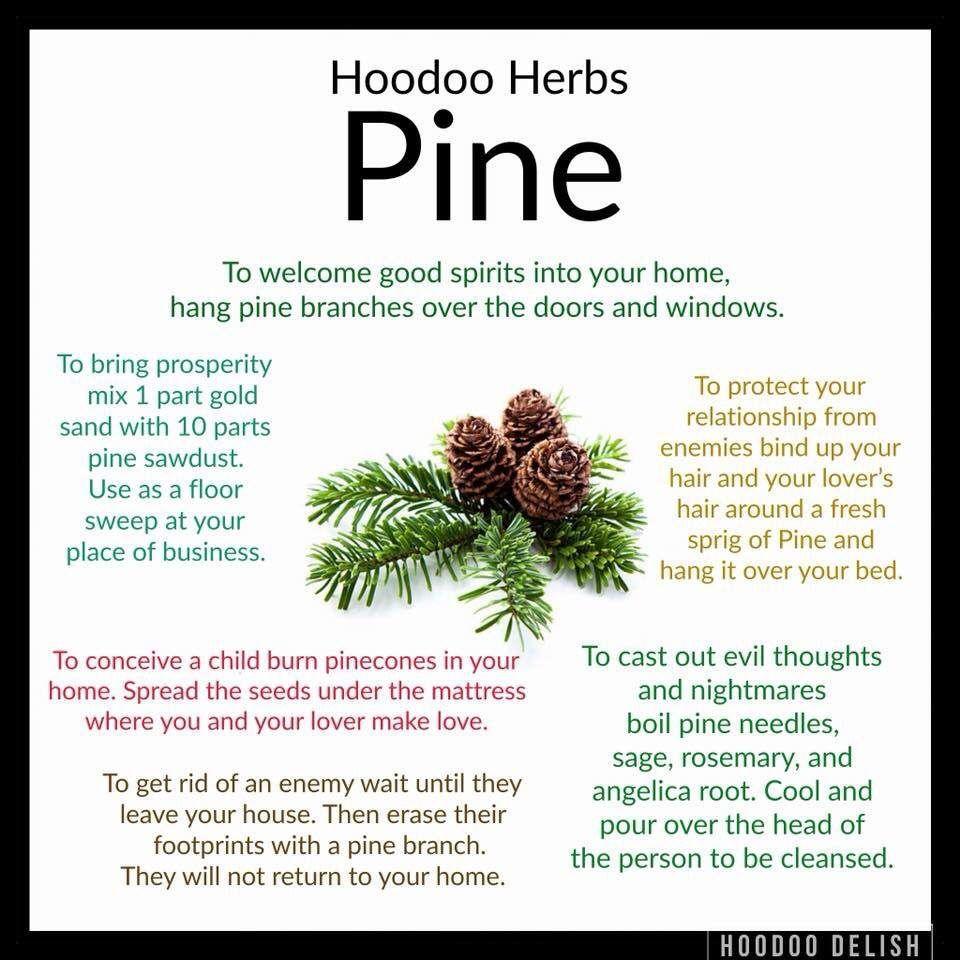 Hoodoo Tips for using Pine | Pagans ... | Wika | Pinterest | Pine ...
