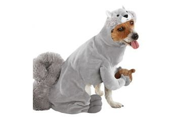 Squirrel pet costume, Target.com | Rusty | Pinterest | Pet ...