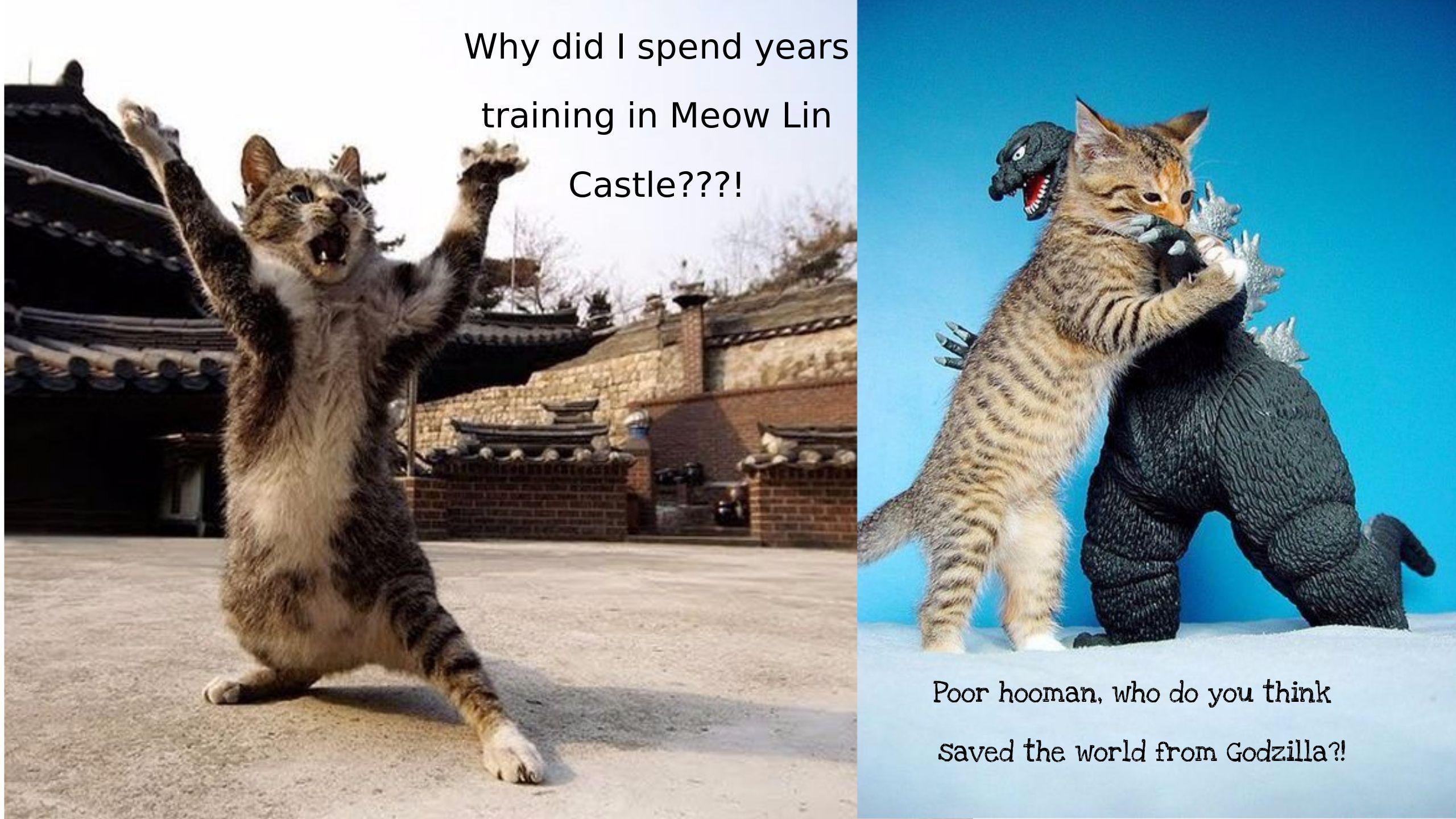 Https Www Youtube Com Watch V I9cdnc48qde Funny Cat Memes Cat Memes Ninja Cats