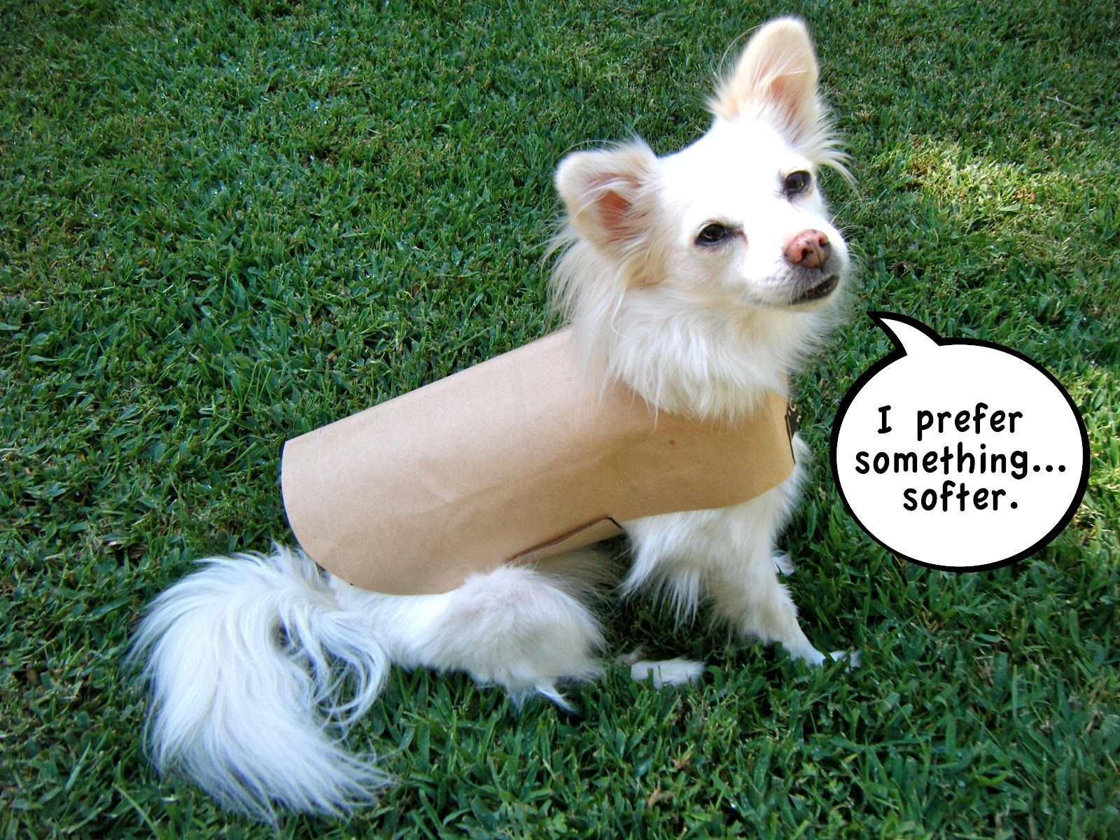 Sew DoggyStyle: DIY Pet Coat Pattern | For the pets! | Pinterest ...