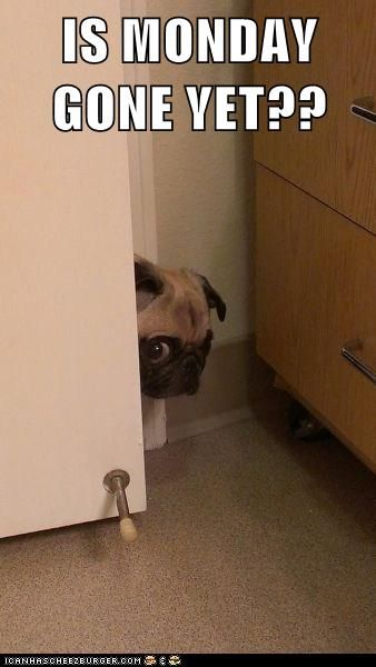 Mondays Are The Scariest Day Of The Week Pug Memes Funny Pictures Funny Animals