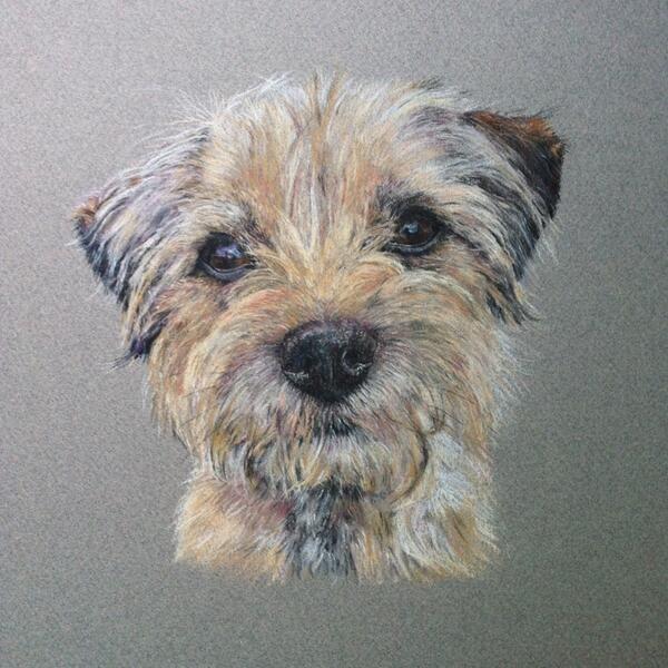 Border Terrier Painting Google Zoeken Dog Paintings Norfolk